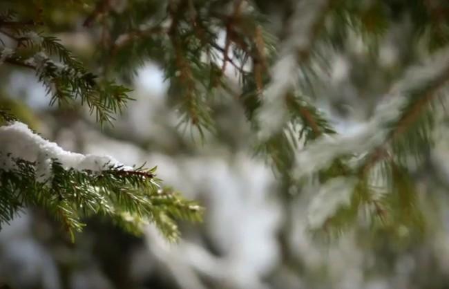 prod-pub-img-whitepod-winter